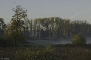 Brumes dans l'Oise, Picardie, France.