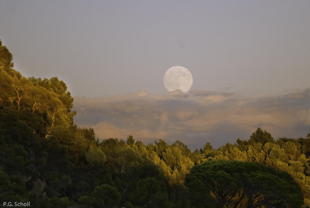 Lever de lune et forêt de pins, Provence, France.