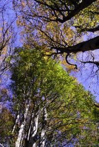 Forêt du Puy de Côme, Auvergne, France.