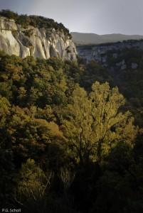Forêt et falaises du Lubéron, Provence, France.