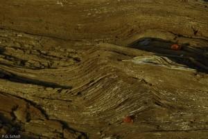 Détail d'un bois mort et baies rouges, Lubéron, France.
