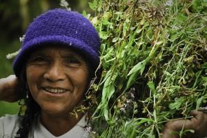 Paysanne équatorienne transportant une botte de luzerne, Cotacac