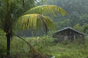 Pluie sur le Maroni, Guyane Française. 2