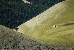 Paturages des Hautes Alpes, France.