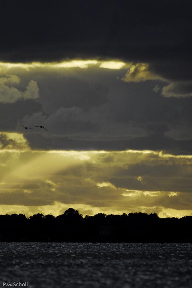 Percée de soleil et oiseaux sur le golfe du Morbihan, France.