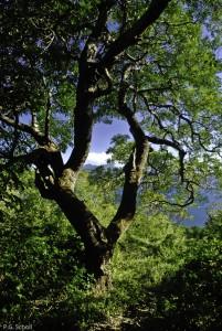 Un arbre sur la laguna del Apoyo, Nicaragua