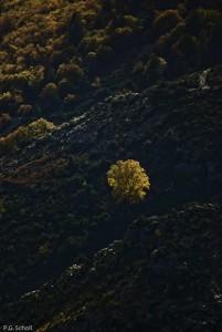 Feuillages d'automne dans les Cévènnes, France