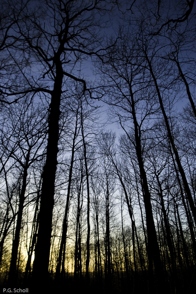 Forêt de Meudon au lever de soleil, région parisienne, France.