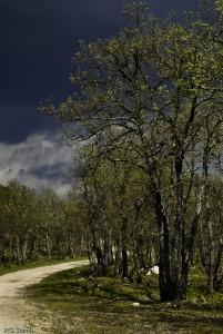 Forêt de Chêne et chemin, Pourrières, France.