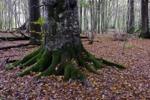 Forêt de Meudon, France.