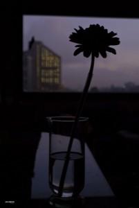 Vase et fleur, Bogota, Colombie.